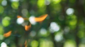 Llamas que queman contra las hojas almacen de video