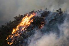 Llamas que queman el cepillo y árboles en la ladera durante el fuego de California Woolsey fotografía de archivo