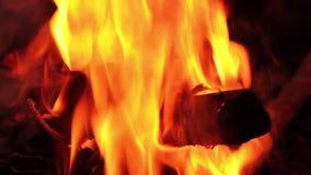 Llamas reales en el fuego con los registros y la nieve ardientes alrededor almacen de metraje de vídeo