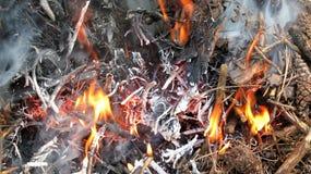 Llamas y cenizas de la madera quemada Imágenes de archivo libres de regalías