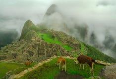 Llamas y Machu Picchu Fotografía de archivo