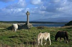 On Llanddwyn Island Stock Photo