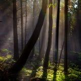 Llandscape de forêt de conte de fées, fond Photos stock