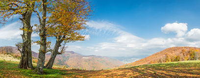 Llandscape with golden tree Royalty Free Stock Image