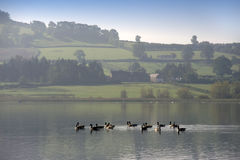 Llangorse lake Royalty Free Stock Images