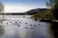 Llangorse lake Royalty Free Stock Photography