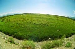 Llano Fotografía de archivo