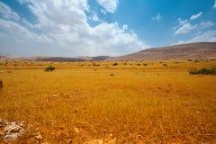 Llano amarillo Imagen de archivo libre de regalías