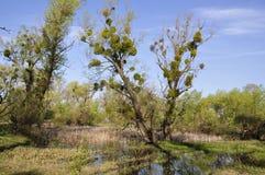 Llano de inundación con los árboles Fotos de archivo libres de regalías