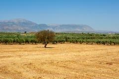 Llano de Messara. Crete, Grecia foto de archivo libre de regalías