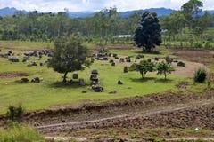 Llano de tarros Imagen de archivo