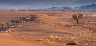 Llano namibiano Imagen de archivo libre de regalías