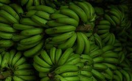 Llantén verde enorme del plátano foto de archivo