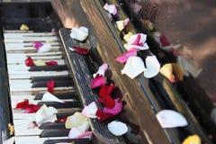 Llaves y pétalos del piano Imagen de archivo