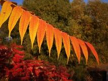 Lle certi foglie ed albero variopinti nella stagione di caduta immagini stock