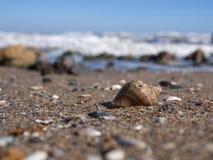 Lle coperture vuote di rapana su una spiaggia sabbiosa, primo piano fotografie stock libere da diritti