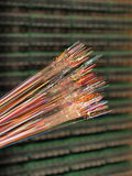Lle fibre ottiche di 12 colori differenti con lo strato spogliato di colore Fotografia Stock