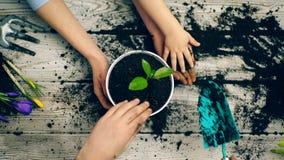Lle mani di due adulti e di un primo piano del bambino che sommerge la terra in un vaso per la piantatura dei fiori Concetto di p stock footage