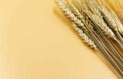 Lle orecchie di dozzina cereali su un fondo giallo regolare con Immagine Stock Libera da Diritti