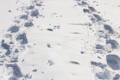 Lle piste della racchetta da neve di due genti convergono Immagini Stock