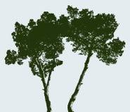 Lle siluette di due pini Fotografie Stock