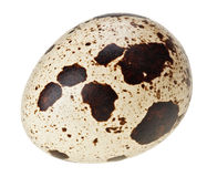 Lle uova di una quaglia isolate su bianco Fotografia Stock