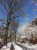 Llegada de los inviernos Simplemente hermoso Imágenes de archivo libres de regalías