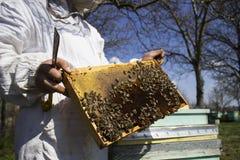 Llevar a cabo el marco de la abeja Imagenes de archivo