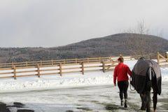Llevar el caballo past3 Imágenes de archivo libres de regalías