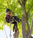 Llevar una motosierra encima de un árbol fotografía de archivo