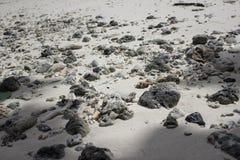 Llife de bord de la mer Photos stock