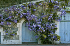 Purple lilac doorway  Royalty Free Stock Photos
