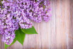 Llilac flowers on wooden  surface Stock Images