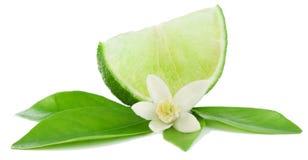 Llime, bloem en plak. Royalty-vrije Stock Afbeelding
