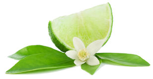 Llime, flower and slice. Lime, leaf, flower and slice Royalty Free Stock Image