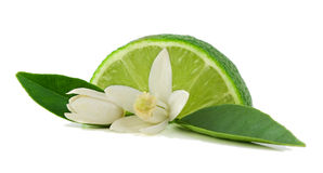 Llime, flower and slice. Lime, leaf, flower and slice Stock Photo