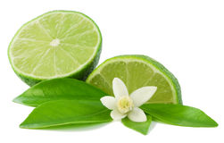 Llime, flower and slice. Lime, leaf, flower and slice Stock Images