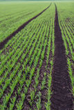 Llines of agricultural landscape Royalty Free Stock Image