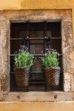 Llittle purpere bloemen in oud venster stock afbeelding