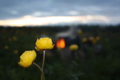 Llius ³ Trà цветков Стоковое фото RF