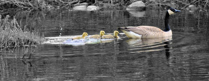 Lll de maman Goose Images libres de droits