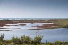 Llobregat lake in Bacelona Stock Image