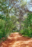 Lloret de Mar forest track to Fenals beach Stock Photography