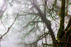 Llovizna en bosque imágenes de archivo libres de regalías