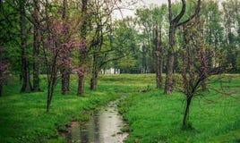 Llovizna temprana de la primavera en el parque Virginia de Potomac Imagenes de archivo