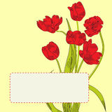 Llow background with tulips Stock Images