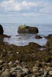 Lloyd Neck Beach Arkivbilder