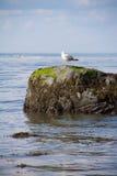 Lloyd Neck Beach Royaltyfria Bilder