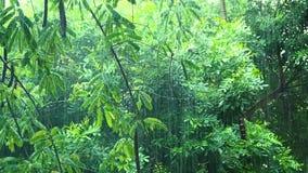 Llueva caer abajo en el bosque verde tropical almacen de metraje de vídeo