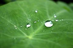 Llueva el descenso del rocío en mañana en la hoja foto de archivo libre de regalías